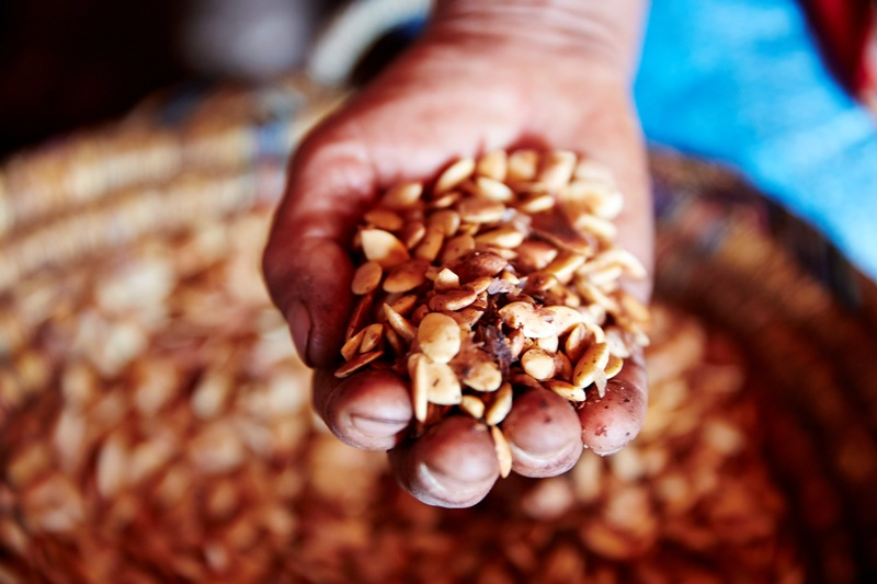 Nüsse vom Argan Baum