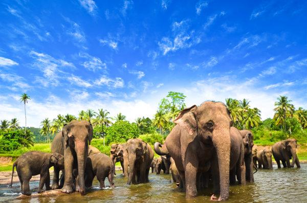 Elephants in the beautiful landscape